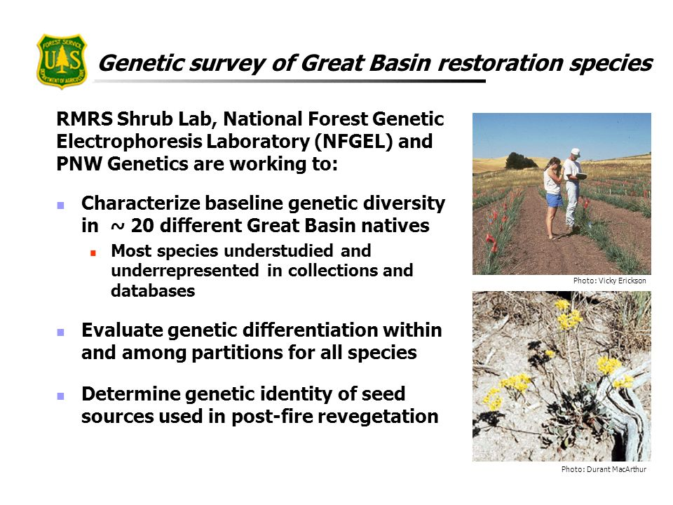 Genetic survey of Great Basin restoration species RMRS Shrub Lab, National Forest Genetic Electrophoresis Laboratory (NFGEL) and PNW Genetics are work