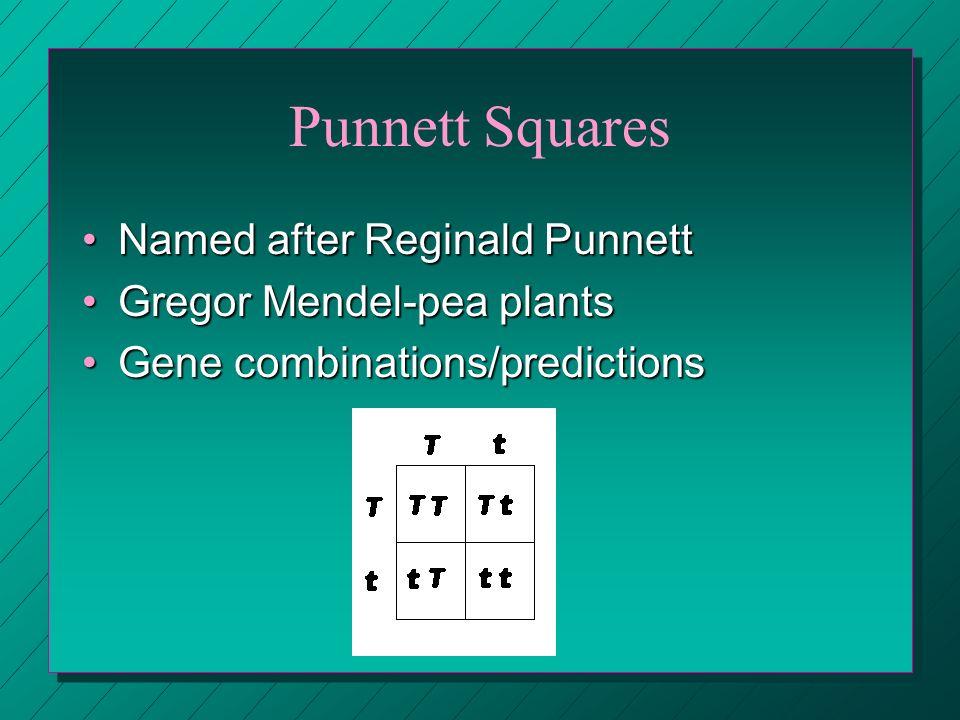 Punnett Squares Named after Reginald PunnettNamed after Reginald Punnett Gregor Mendel-pea plantsGregor Mendel-pea plants Gene combinations/prediction