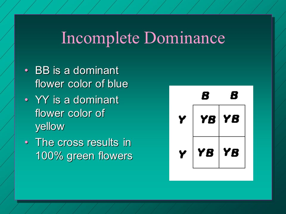 Incomplete Dominance BB is a dominant flower color of blueBB is a dominant flower color of blue YY is a dominant flower color of yellowYY is a dominan