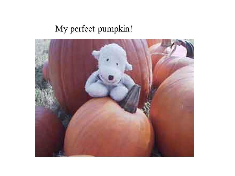 My perfect pumpkin!