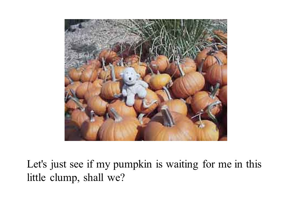 Let's just see if my pumpkin is waiting for me in this little clump, shall we?