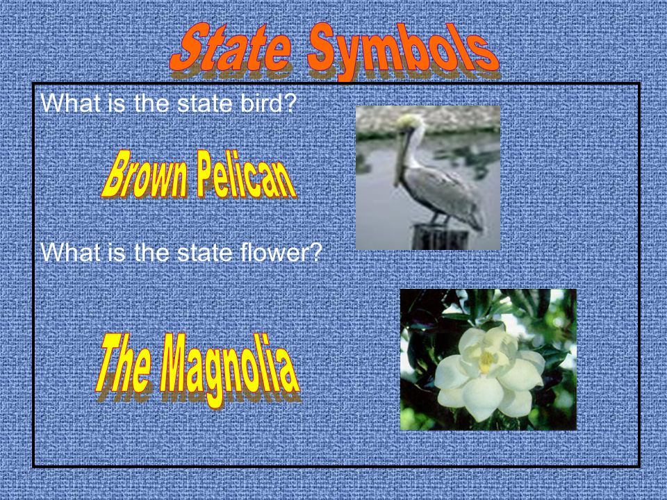 What is the state dog? What is the state insect?