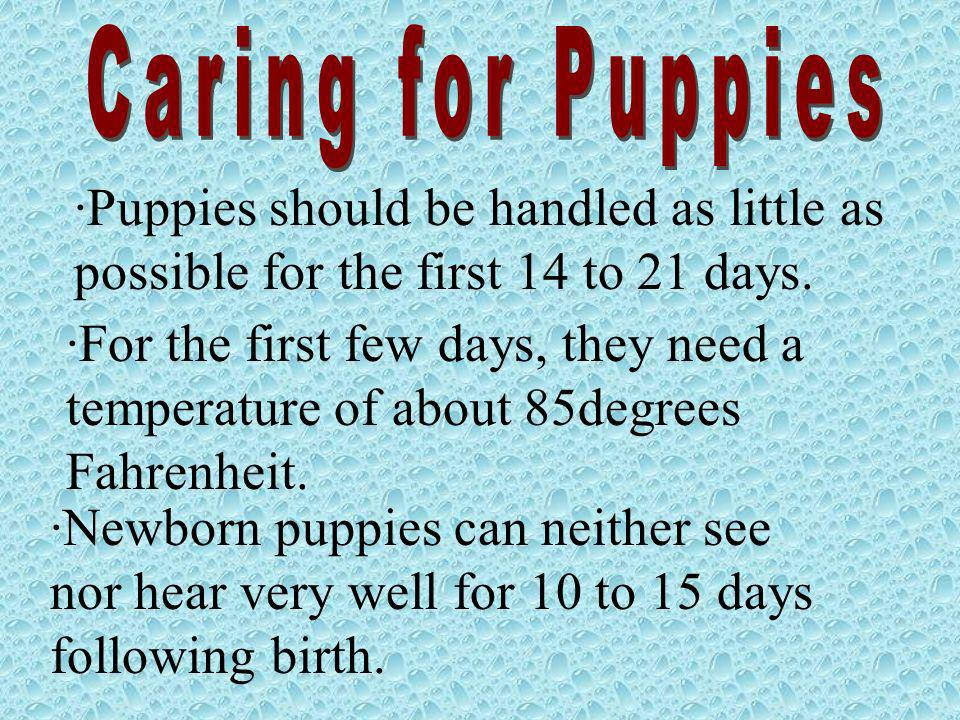 ·Puppies should be handled as little as possible for the first 14 to 21 days. ·For the first few days, they need a temperature of about 85degrees Fahr