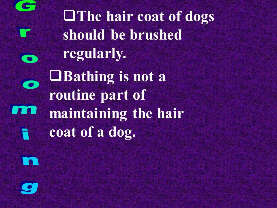 The hair coat of dogs should be brushed regularly. Bathing is not a routine part of maintaining the hair coat of a dog.