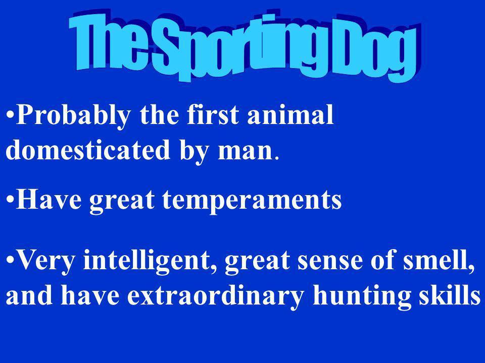 Pointer German Shorthaired German Wirehaired Labrador Retriever American Cocker Spaniel English Setter Brittany Irish Setter Springer Spaniel Sporting Dogs