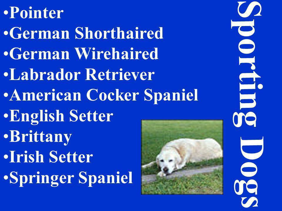 Pointer German Shorthaired German Wirehaired Labrador Retriever American Cocker Spaniel English Setter Brittany Irish Setter Springer Spaniel Sporting