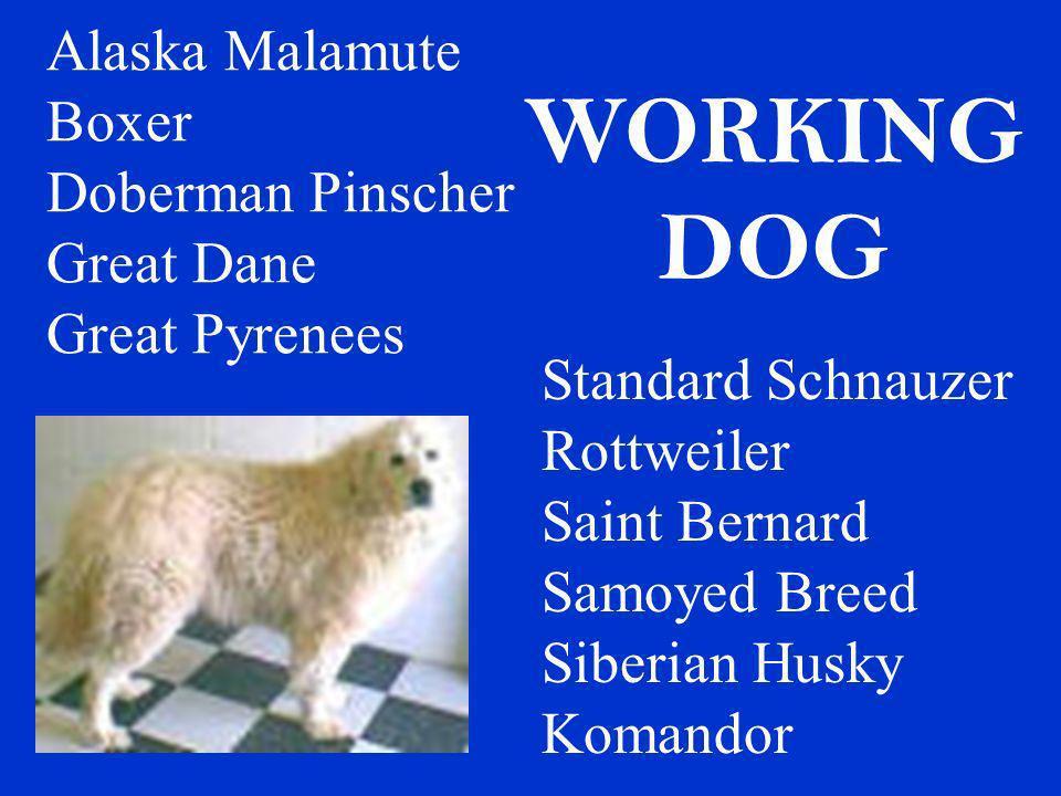 Alaska Malamute Boxer Doberman Pinscher Great Dane Great Pyrenees Standard Schnauzer Rottweiler Saint Bernard Samoyed Breed Siberian Husky Komandor WO