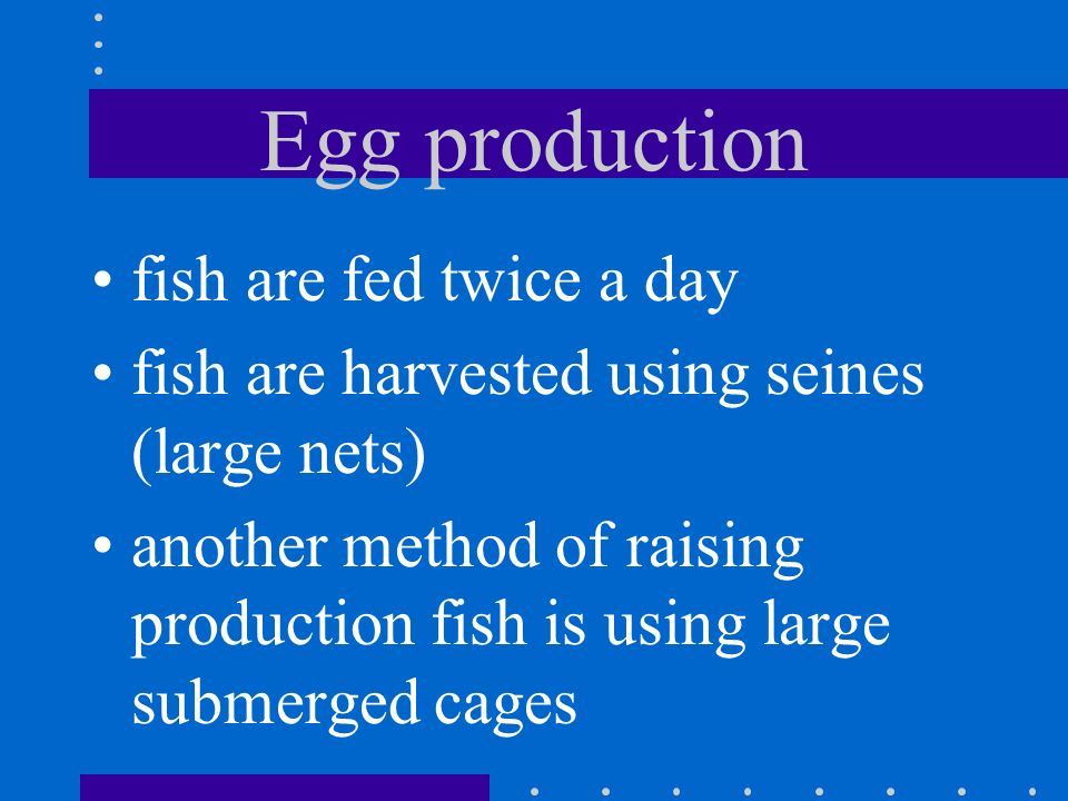 Egg production When small fish hatch (called fry) they are placed in tanks until they are about two inches long (then called fingerlings) fingerlings