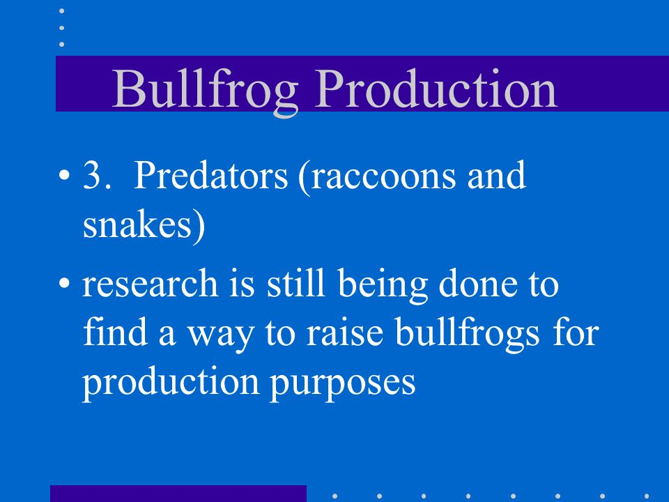 Bullfrog Production attempts to raise bullfrogs in captivity have been unsuccessful for many reasons 1. Animals are territorial 2. Frogs only eat food