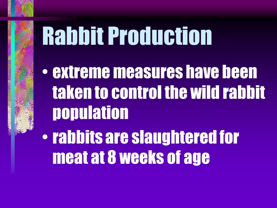 rabbits became a serious pest in both Australia and New Zealand they have no natural predators in these countries