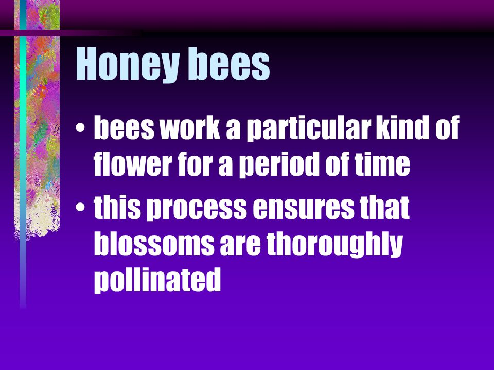 bees assist pollination by scattering pollen from one plant to the next as they gather nectar and pollen most insects work on flowers and go from one