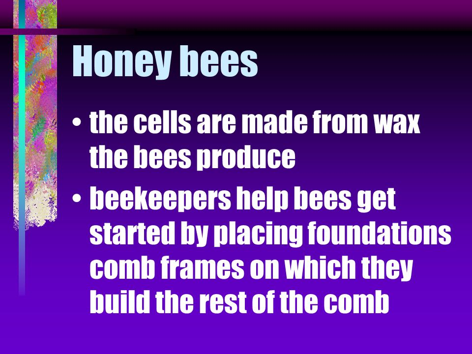 different flowers produce different nectar makes different colors and flavors of honey bees store honey in six sided cells joined together to create a