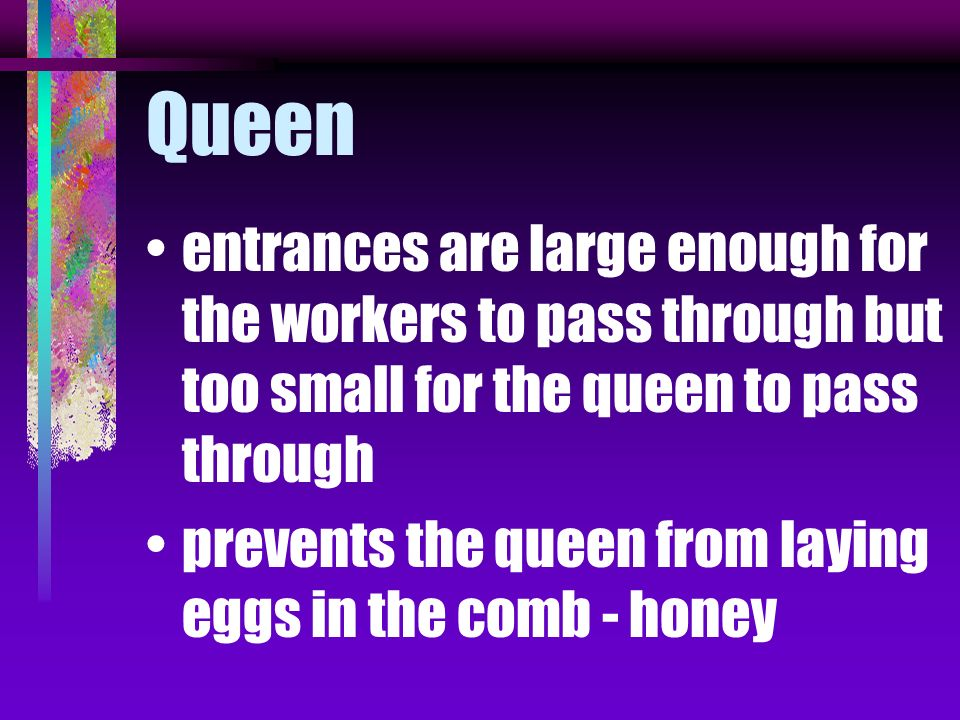 she is recognized as queen because she is larger and slender kept in the lower part of the hive called the brood chamber