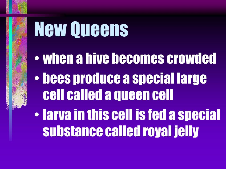 Queen can be produced commercially in small hives called nukes