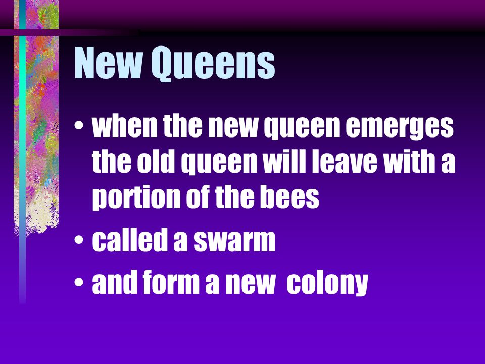 New Queens when a hive becomes crowded bees produce a special large cell called a queen cell larva in this cell is fed a special substance called roya