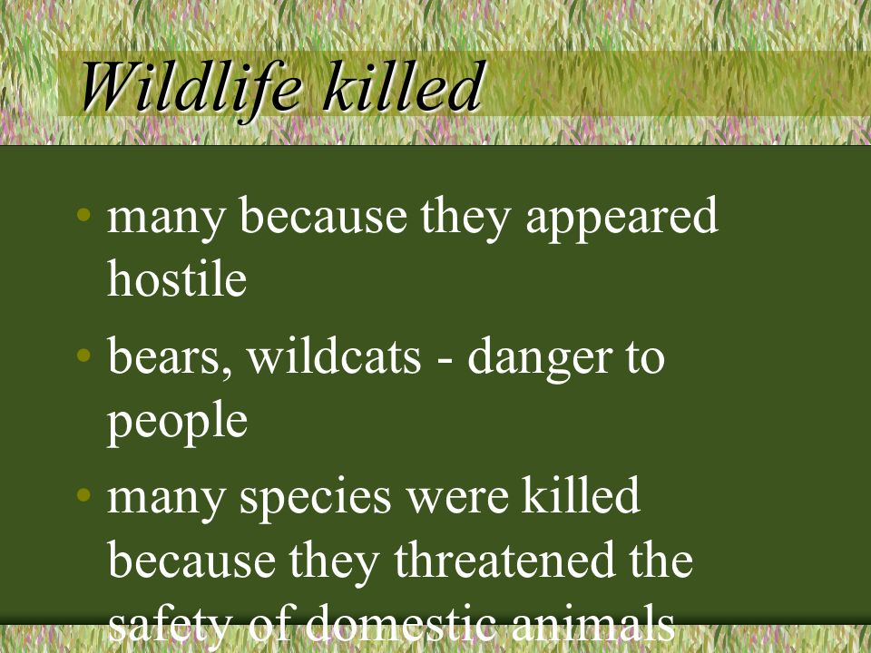 Wildlife killed many because they appeared hostile bears, wildcats - danger to people many species were killed because they threatened the safety of domestic animals