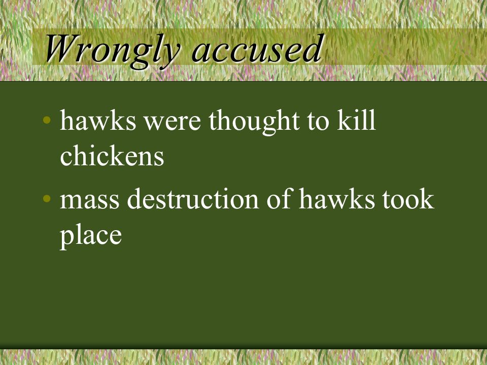 Wrongly accused hawks were thought to kill chickens mass destruction of hawks took place