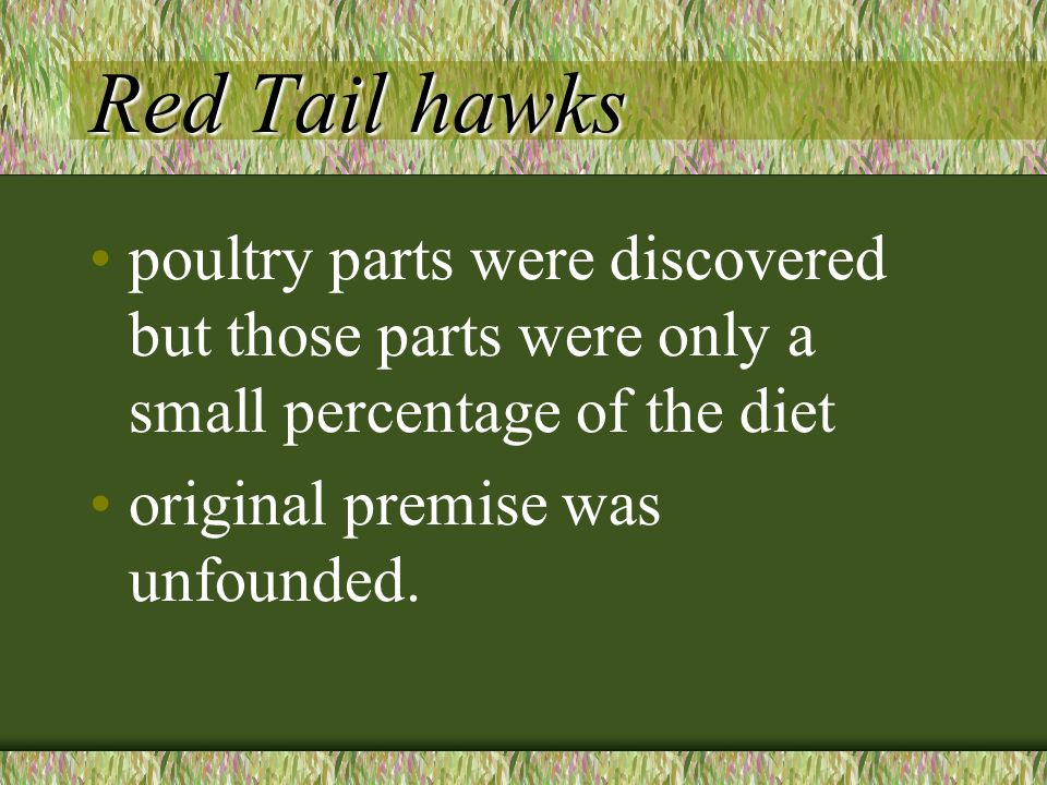 Red Tail hawks poultry parts were discovered but those parts were only a small percentage of the diet original premise was unfounded.