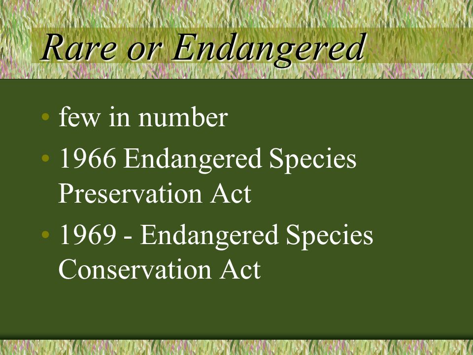 Rare or Endangered few in number 1966 Endangered Species Preservation Act 1969 - Endangered Species Conservation Act