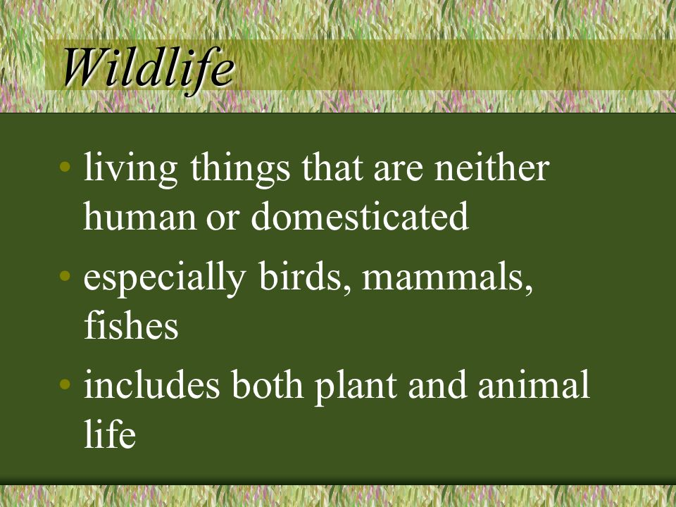 Wildlife living things that are neither human or domesticated especially birds, mammals, fishes includes both plant and animal life