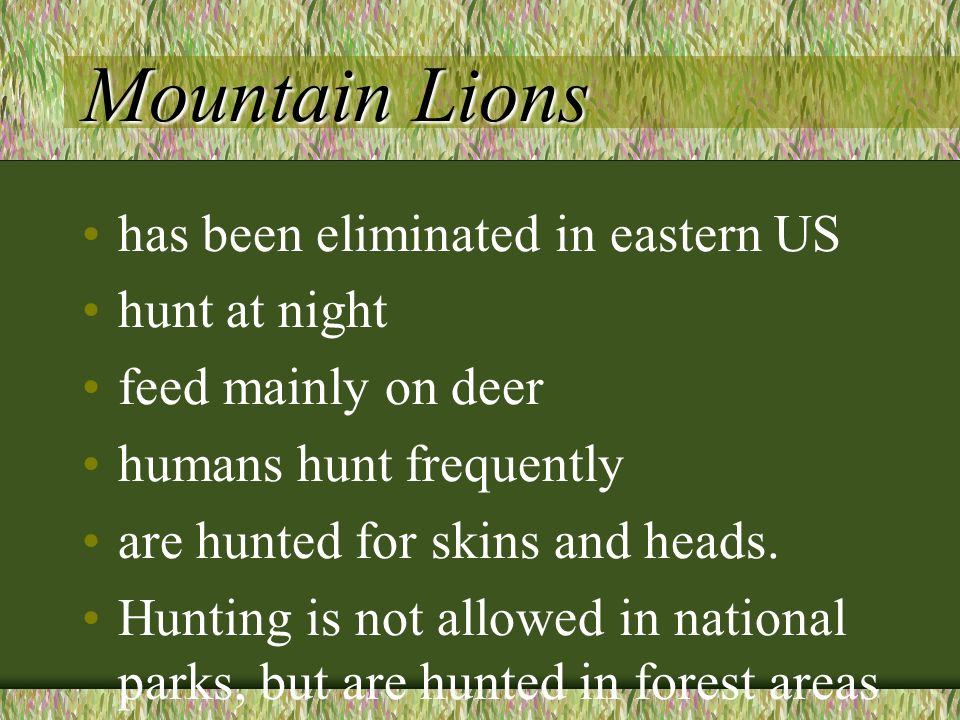 Mountain Lions has been eliminated in eastern US hunt at night feed mainly on deer humans hunt frequently are hunted for skins and heads. Hunting is n