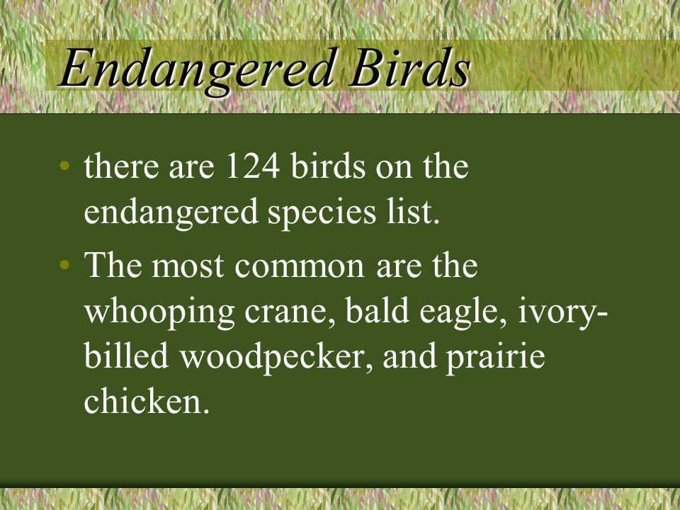 Endangered Birds there are 124 birds on the endangered species list.