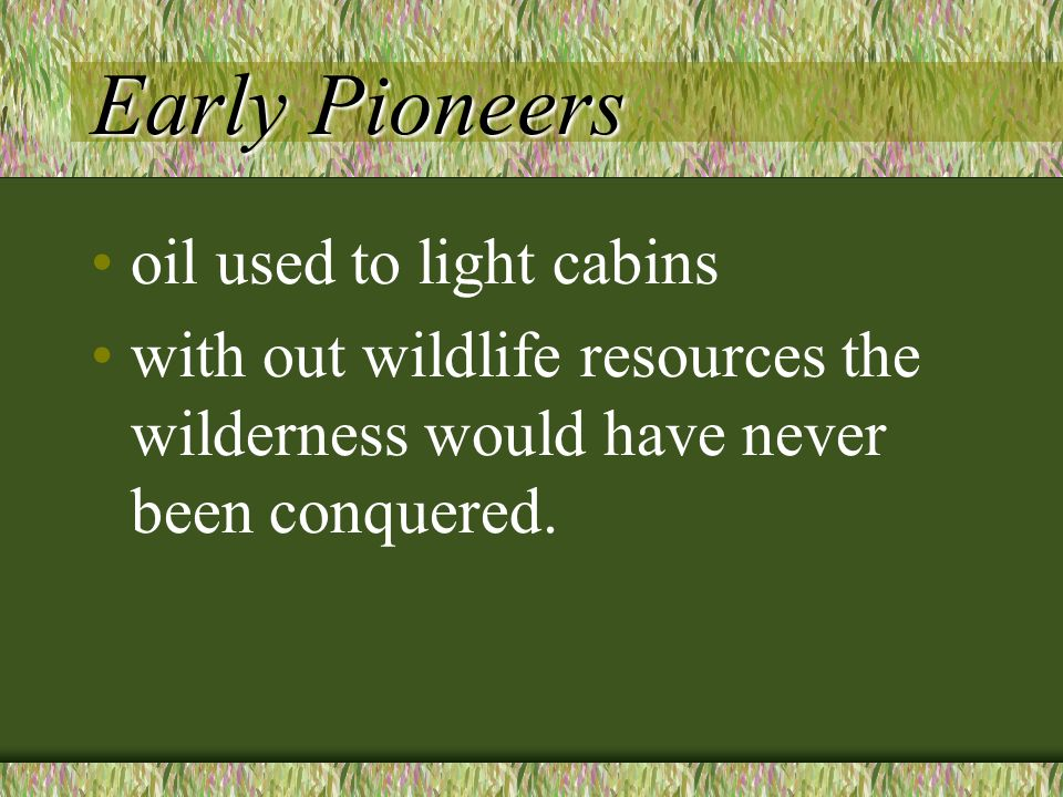 Early Pioneers oil used to light cabins with out wildlife resources the wilderness would have never been conquered.