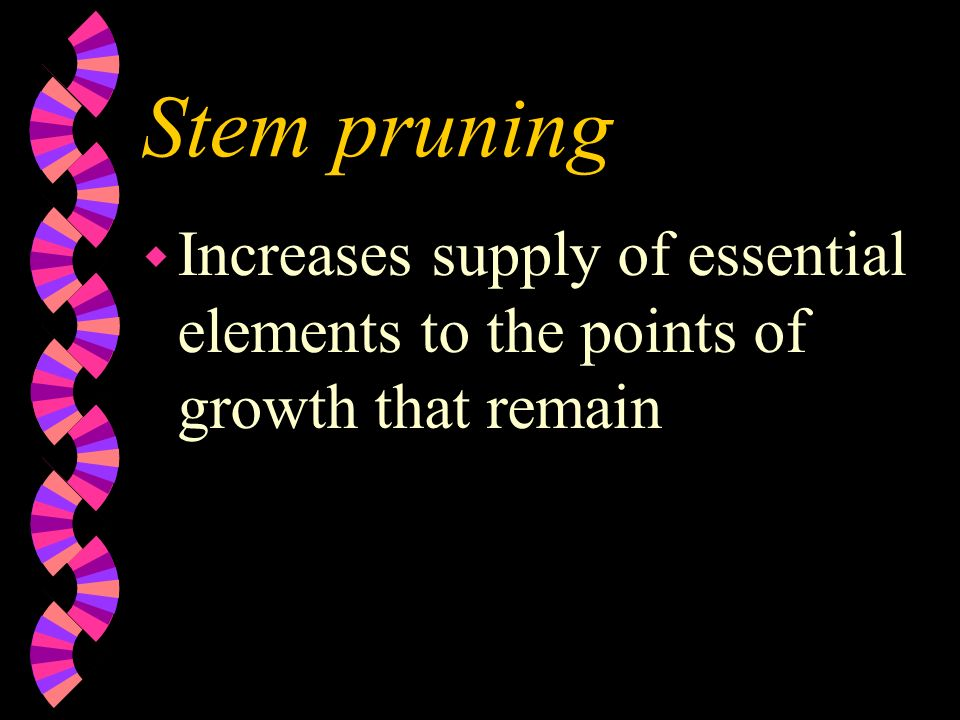 Stem pruning wrwreduces amount of growth wiwinfluences vegetative reproductive balance of the plant wrwreduces plant size, yield, and total amount of growth