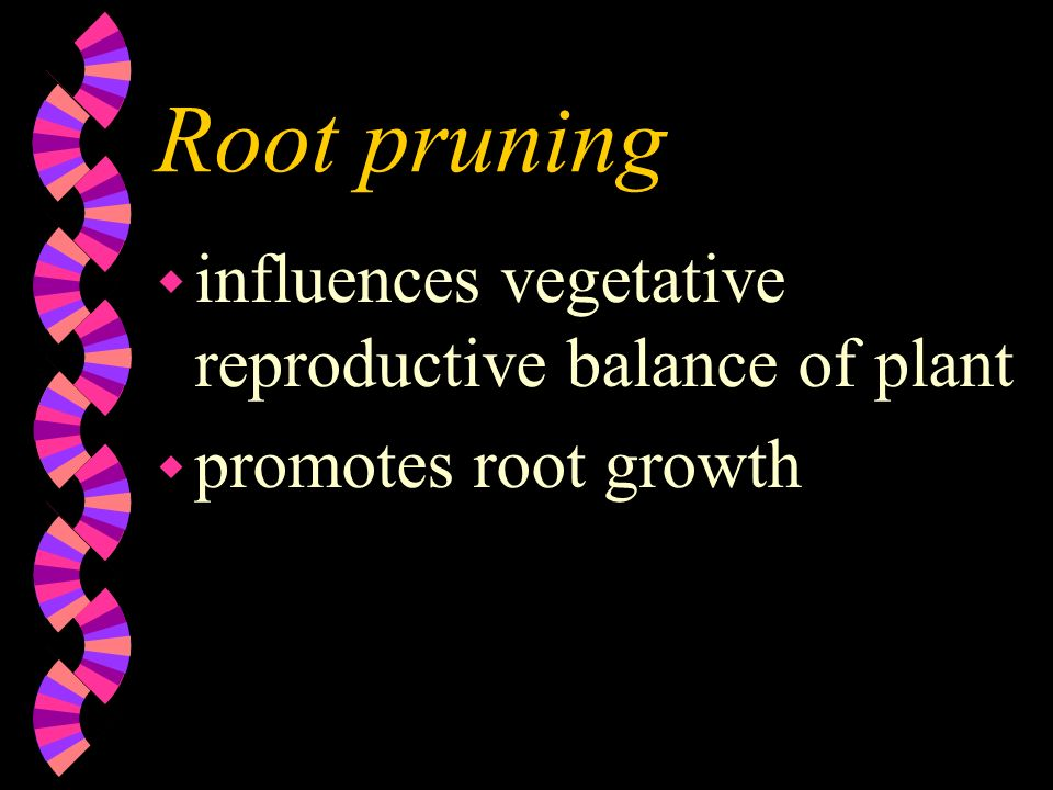 Root pruning wawaffects total amount of growth made wrwreduces amount of available essential elements - causes dwarfing