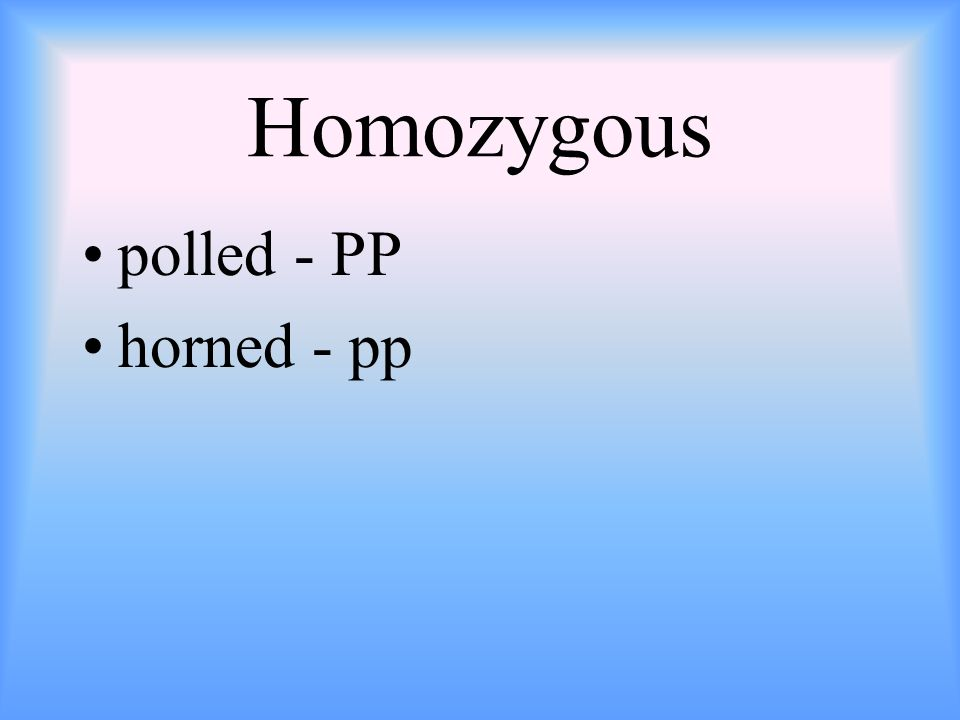 Homozygous polled - PP horned - pp