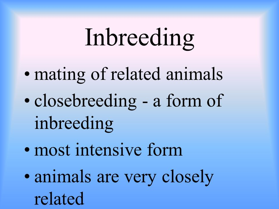 Inbreeding mating of related animals closebreeding - a form of inbreeding most intensive form animals are very closely related
