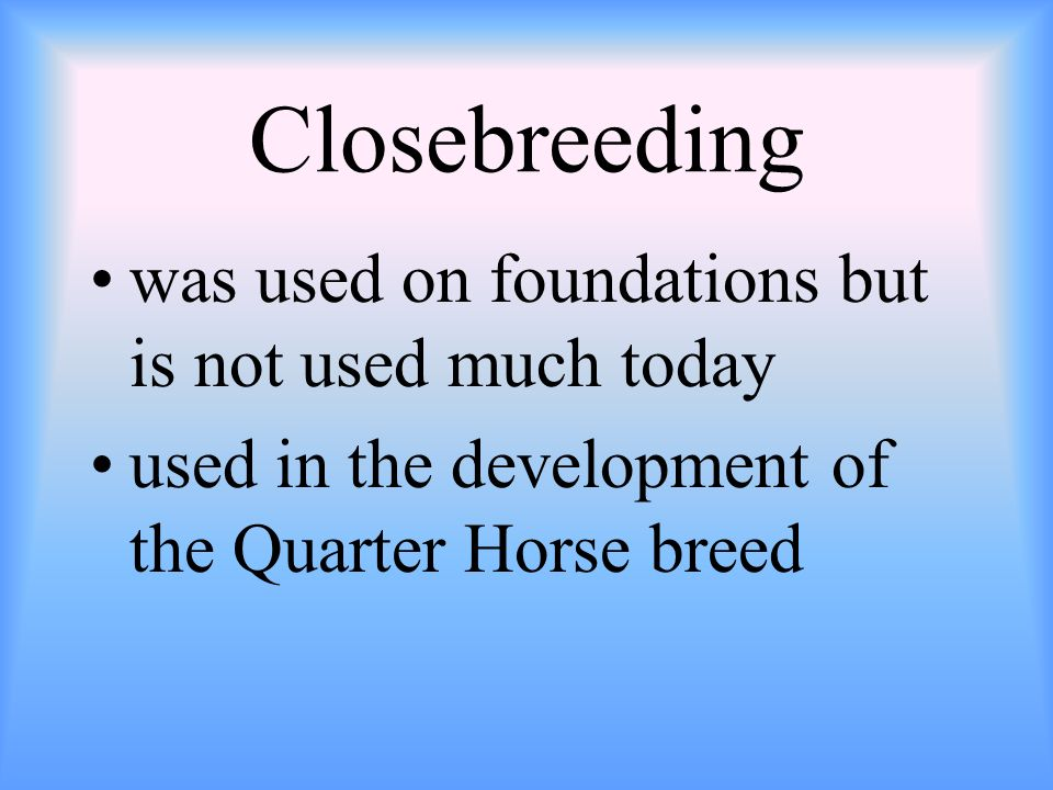 Closebreeding was used on foundations but is not used much today used in the development of the Quarter Horse breed