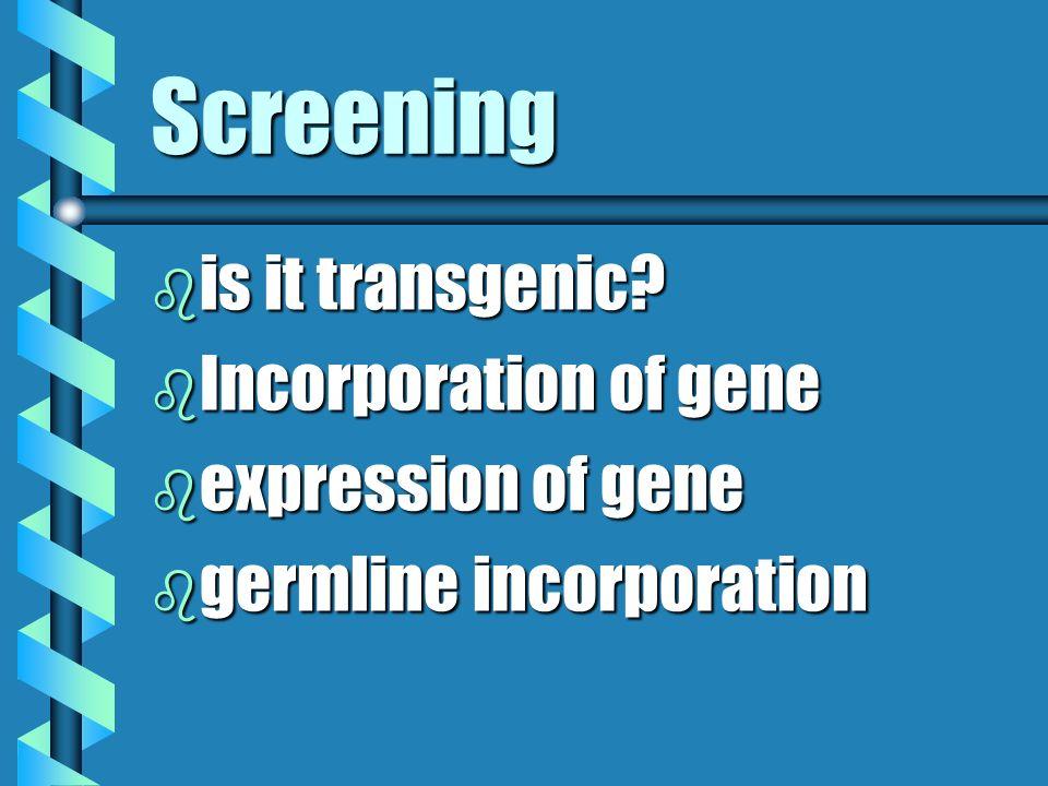 Screening b is it transgenic? b Incorporation of gene b expression of gene b germline incorporation