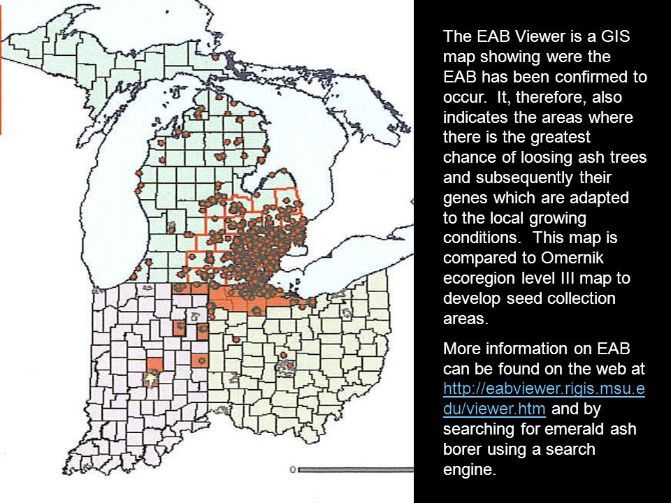 The EAB Viewer is a GIS map showing were the EAB has been confirmed to occur. It, therefore, also indicates the areas where there is the greatest chan