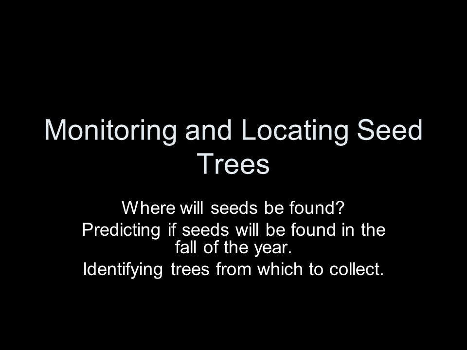 Monitoring and Locating Seed Trees Where will seeds be found.