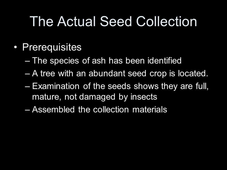 The Actual Seed Collection Prerequisites –The species of ash has been identified –A tree with an abundant seed crop is located. –Examination of the se