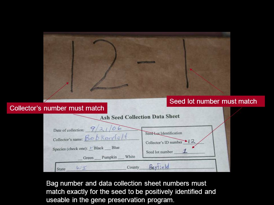 Bag number and data collection sheet numbers must match exactly for the seed to be positively identified and useable in the gene preservation program.