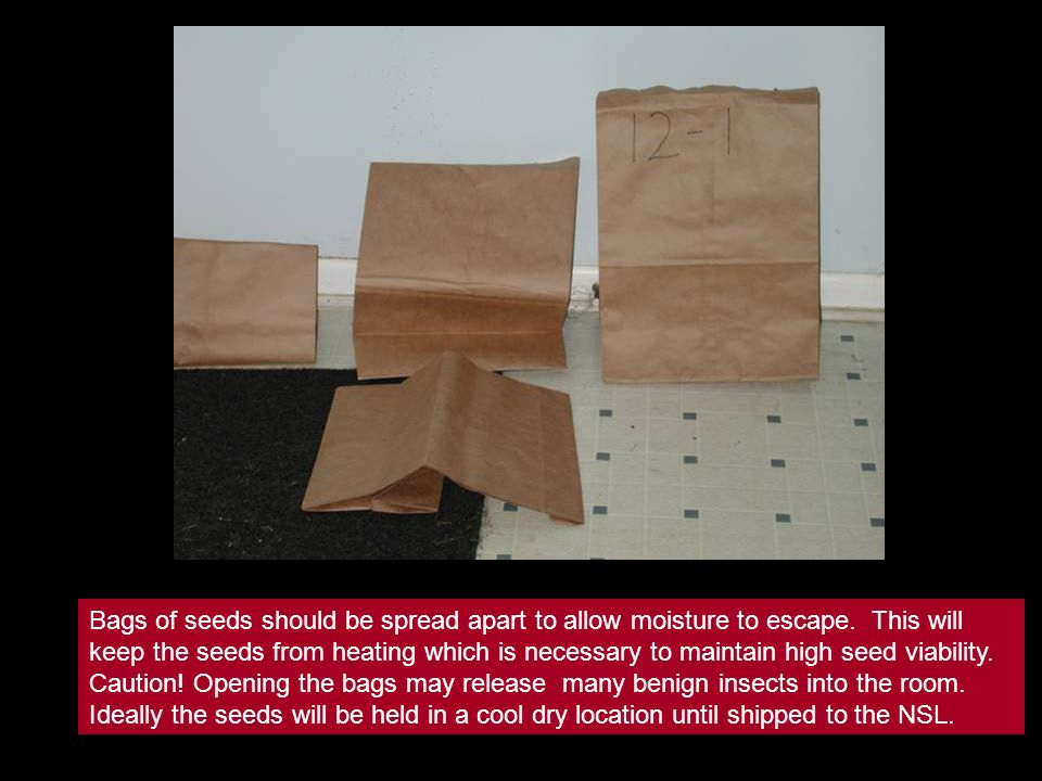 Bags of seeds should be spread apart to allow moisture to escape.