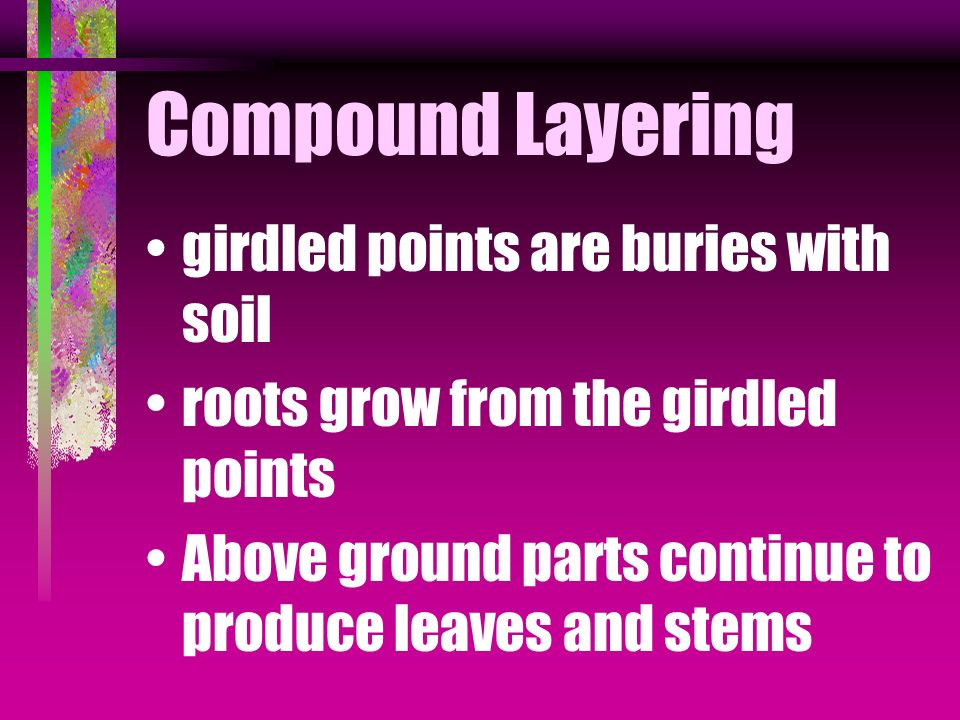 Compound Layering stem is covered by soil at two or more points remaining portion is left uncovered Stem is girdled at points