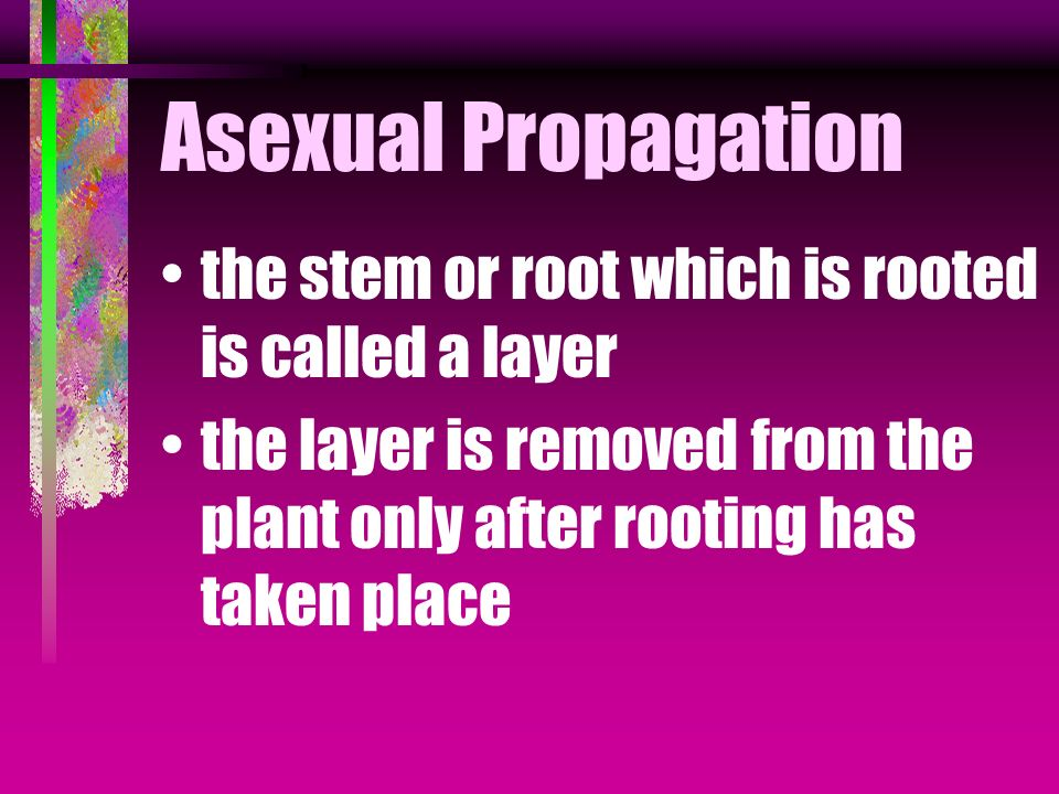 Asexual Propagation Roots are formed on a stem root while still attached to the parent plant