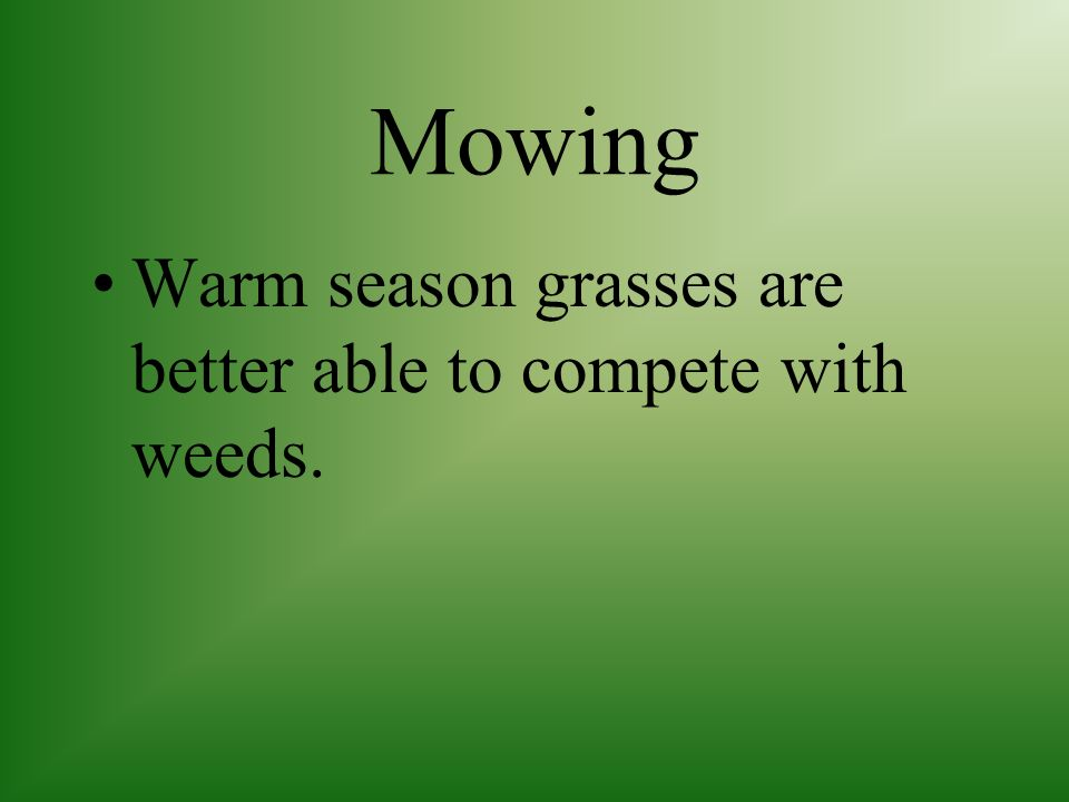 Mowing Warm season grasses are cut 1/2 to 11/4 inches depending on the variety Warm season grasses grow faster in warm weather