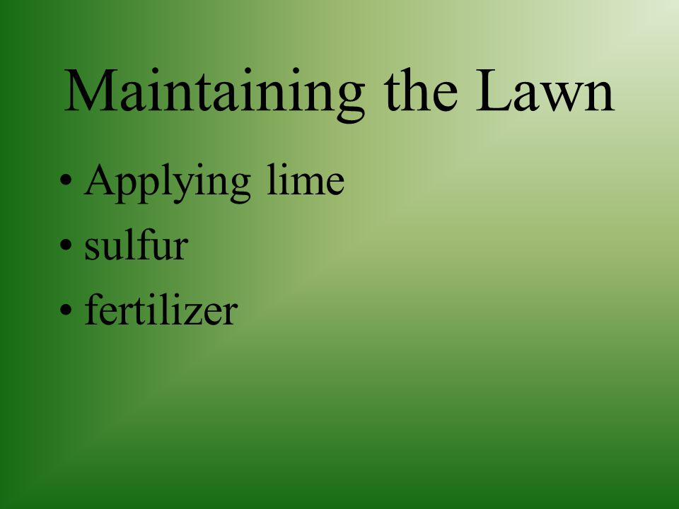 Maintaining the Lawn