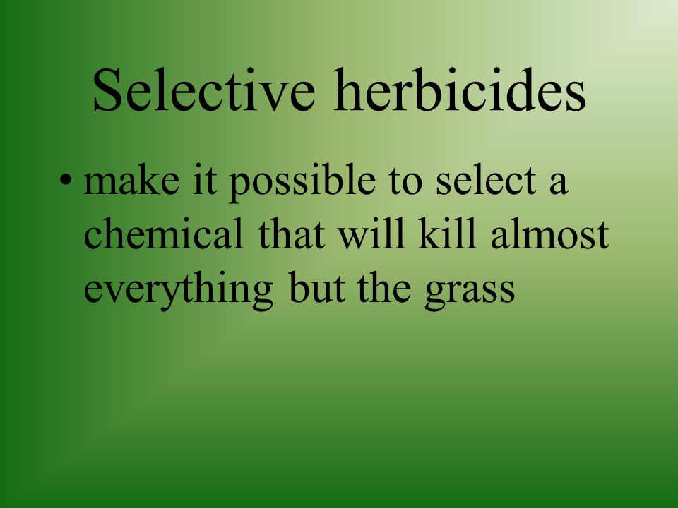Post Emergence herbicides are applied after weeds sprout and begin to grow Many chemicals are selective and only kill certain types of plants