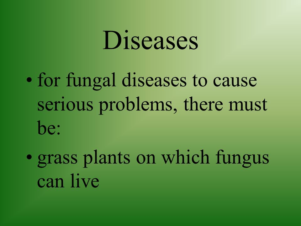 Diseases Fungus diseases are spread easily by mowing or simply walking across the infected area especially if the grass is wet