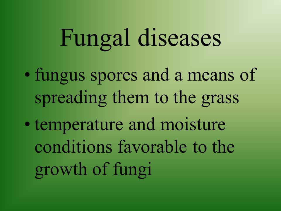 Diseases for fungal diseases to cause serious problems, there must be: grass plants on which fungus can live