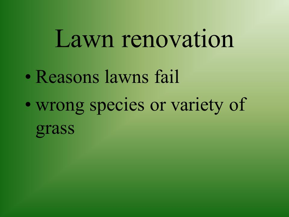 Insect Control can cause serious damage to lawns spraying of application of granular insecticide may be necessary