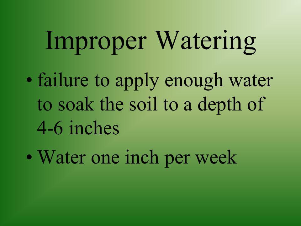 Fertilizing Use slow release, high N fertilizer according to soil test results