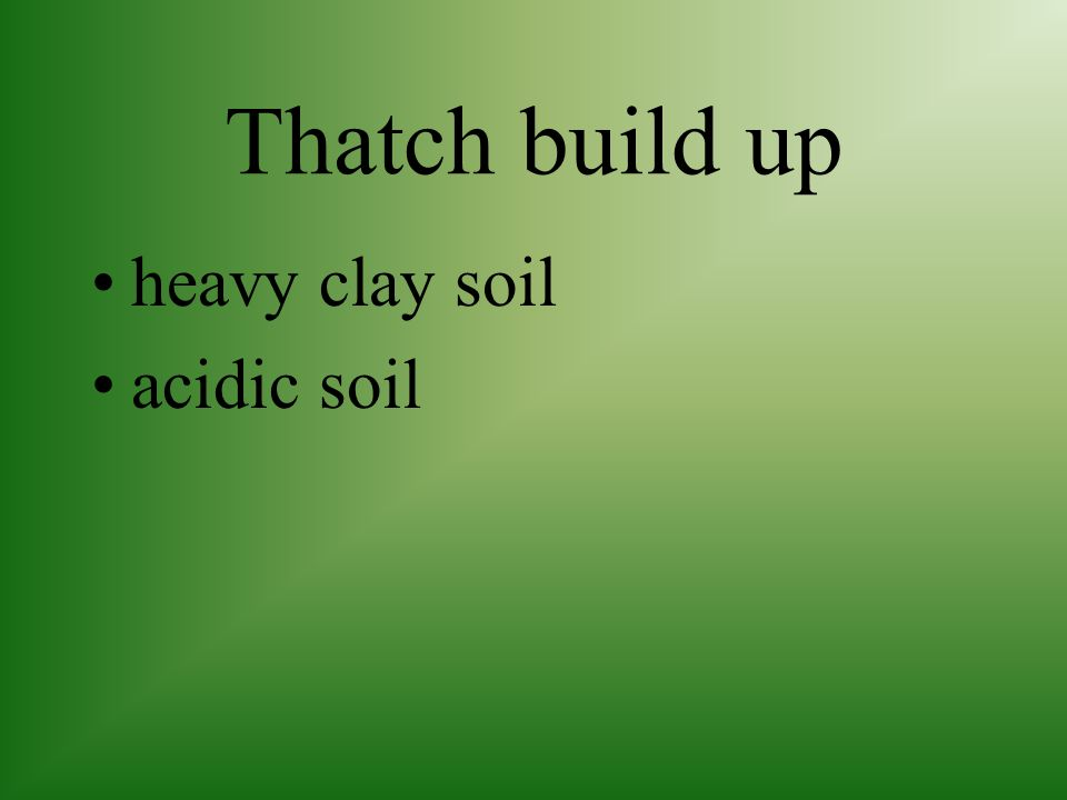 Thatch build up not adjusting mower blade properly returning clippings to the lawn heavy fertilizing