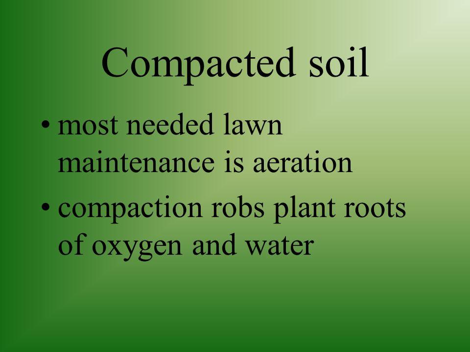 Thatch build up heavy clay soil acidic soil