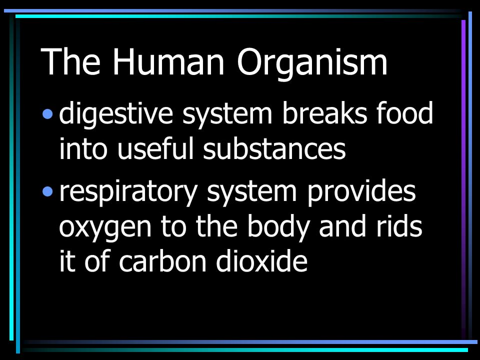 The Human Organism digestive system breaks food into useful substances respiratory system provides oxygen to the body and rids it of carbon dioxide